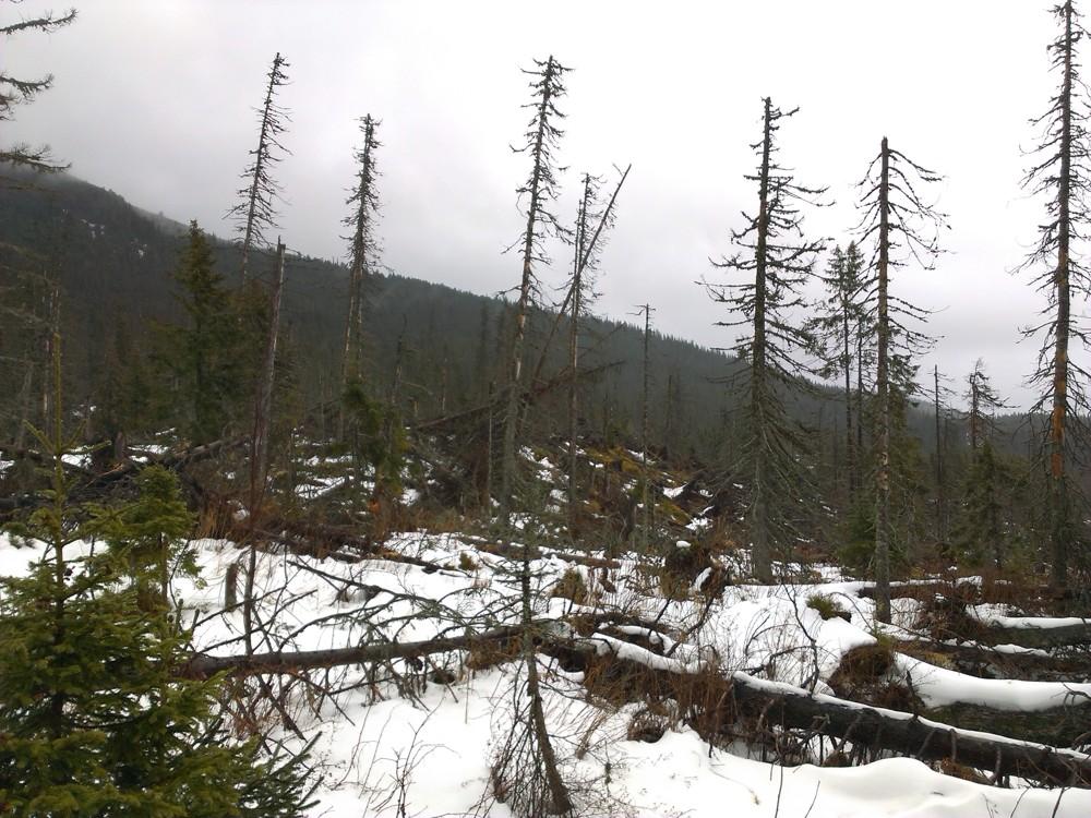 Vyhubia extrémne mrazy tatranských lykožrútov?