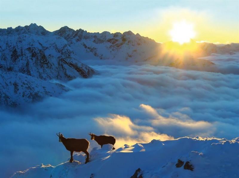 Obrázok: Život v oblakoch