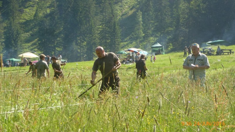 Obrázok: Kosenie tatranských lúk