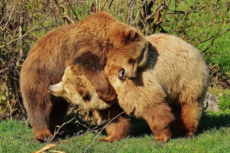 Obrázok: Medvedie dni 2016
