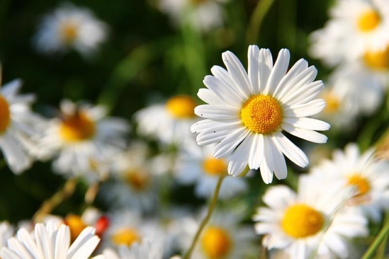 Obrázok: Kvety a trávy Tatier