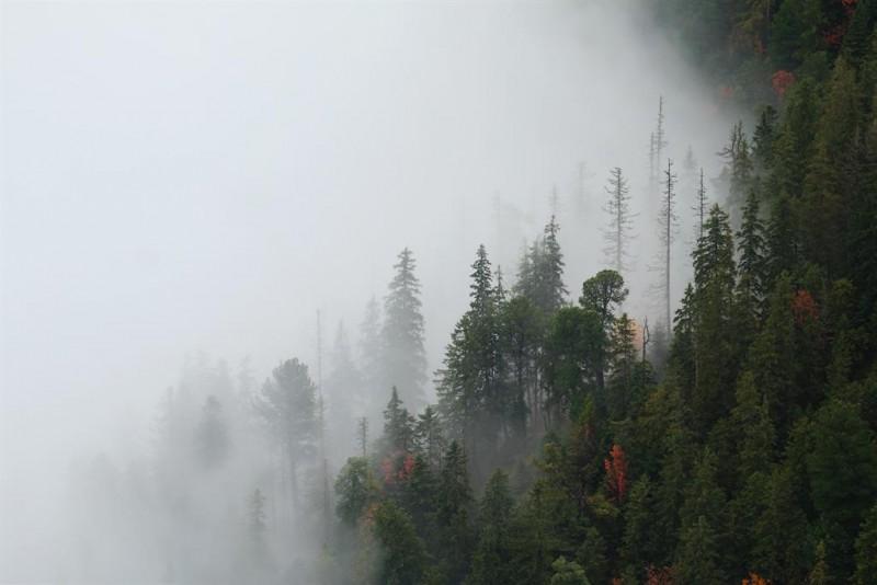 Obrázok: Nesmrteľný les